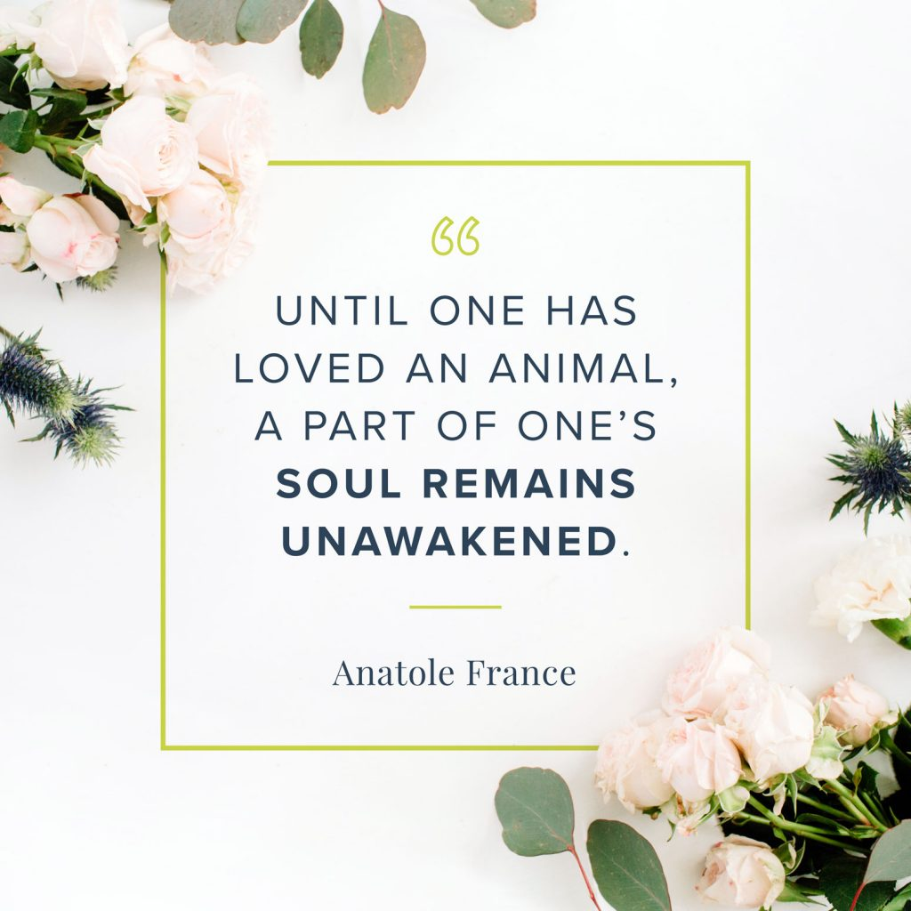 until one has loved an animal quote