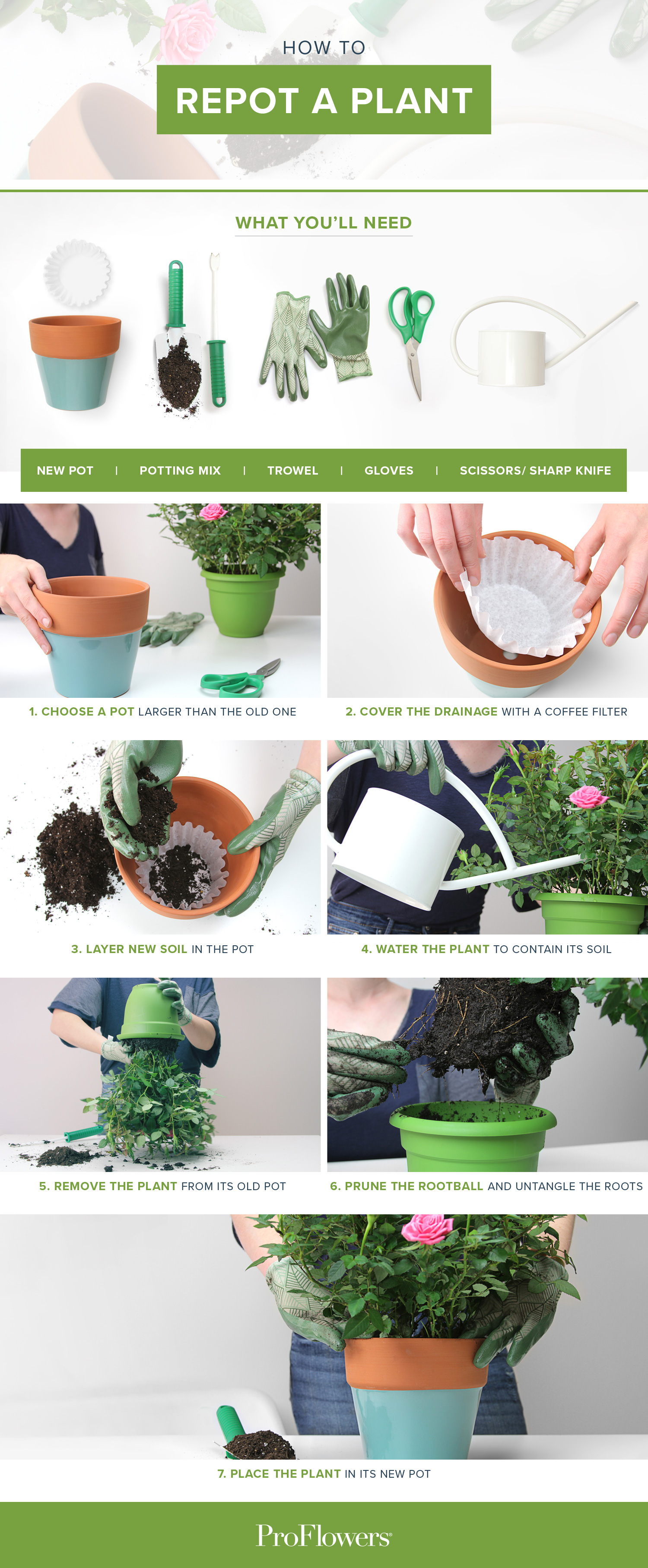 complete guide for how to repot a plant