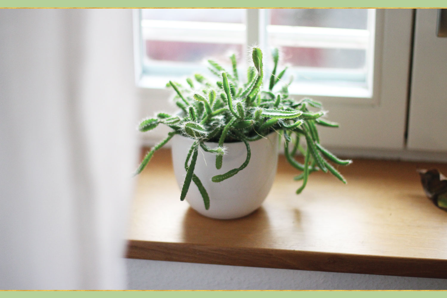 potted green plant by window