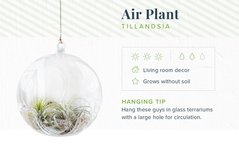 indoor hanging plants air
