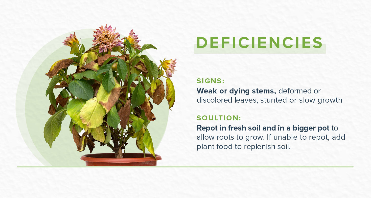 how to revive a plant with nutrition deficiencies