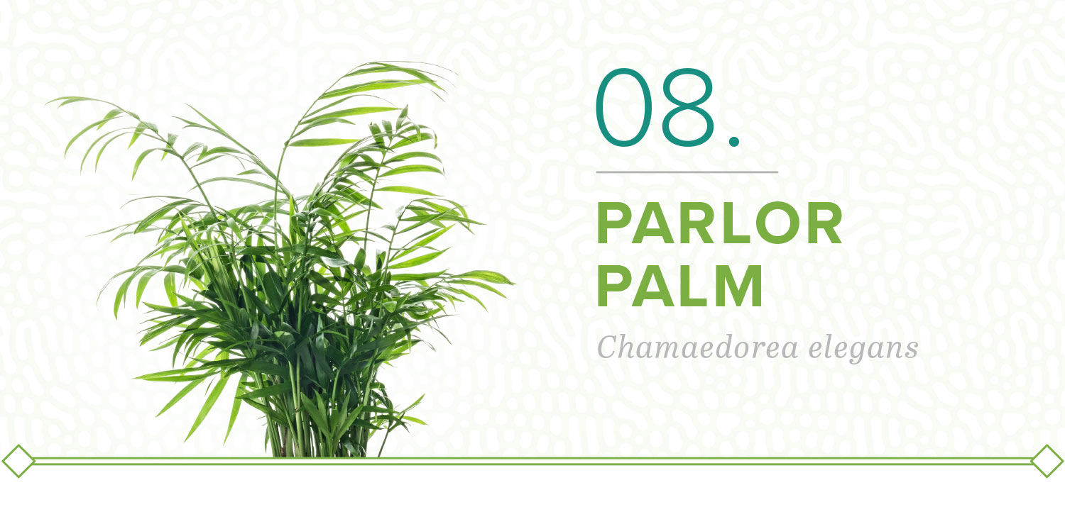 parlor palm plants that don't need sun