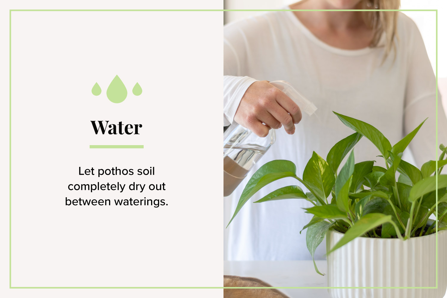 spraying pothos with water