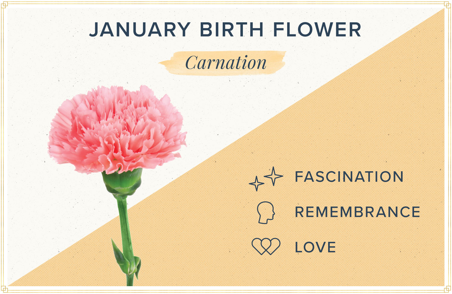 January birth month flower meaning carnation