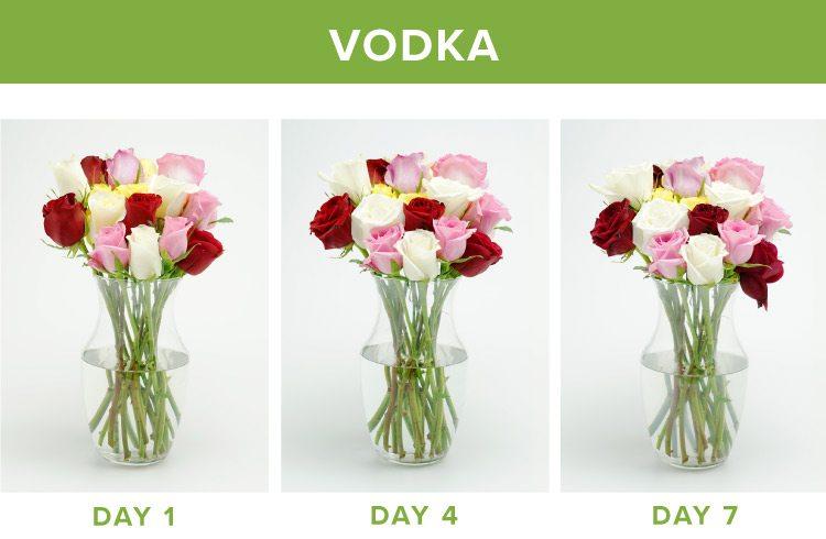 how to make flowers last longer vodka