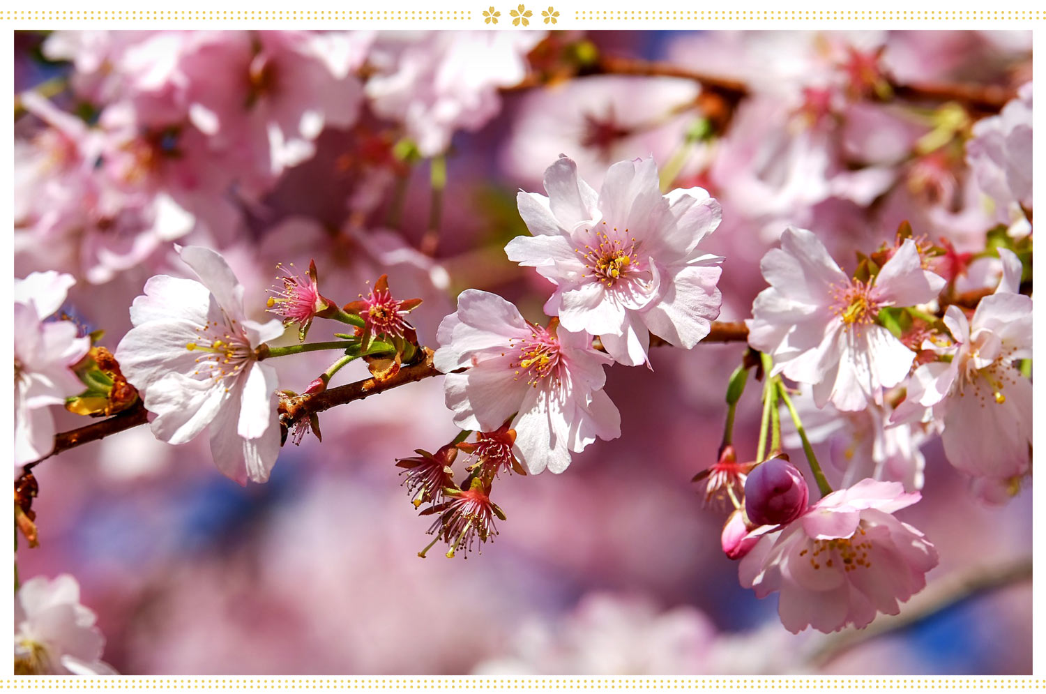 types of Japanese flowers