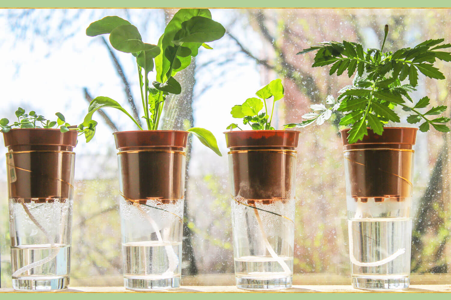 plants using watering drip system