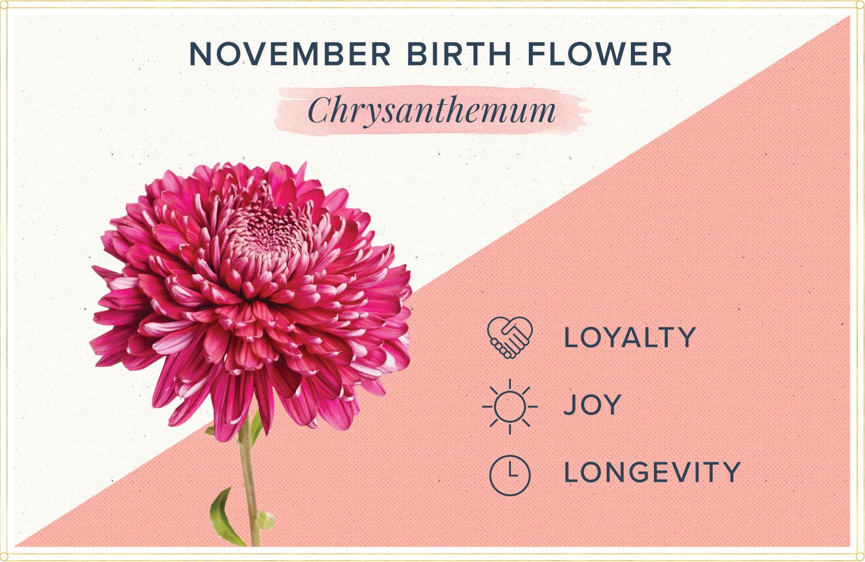 November birth month flower meaning chrysanthemum