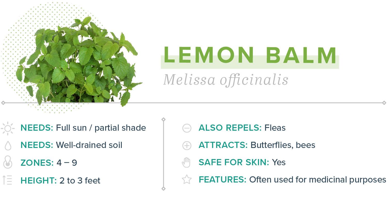 lemon balm plants that repel mosquitoes