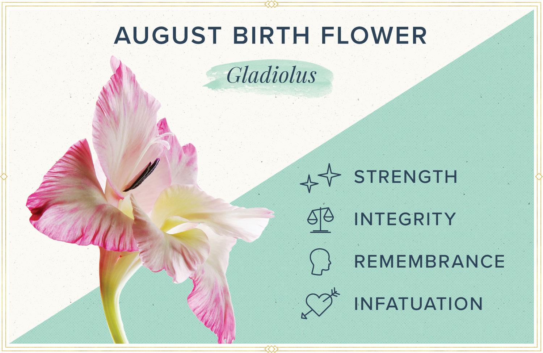 August birth month flower meaning gladiolus