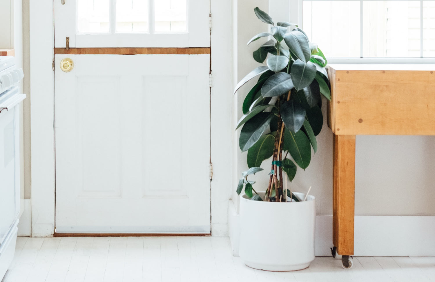 rubber plant next to wooden table in white room near door