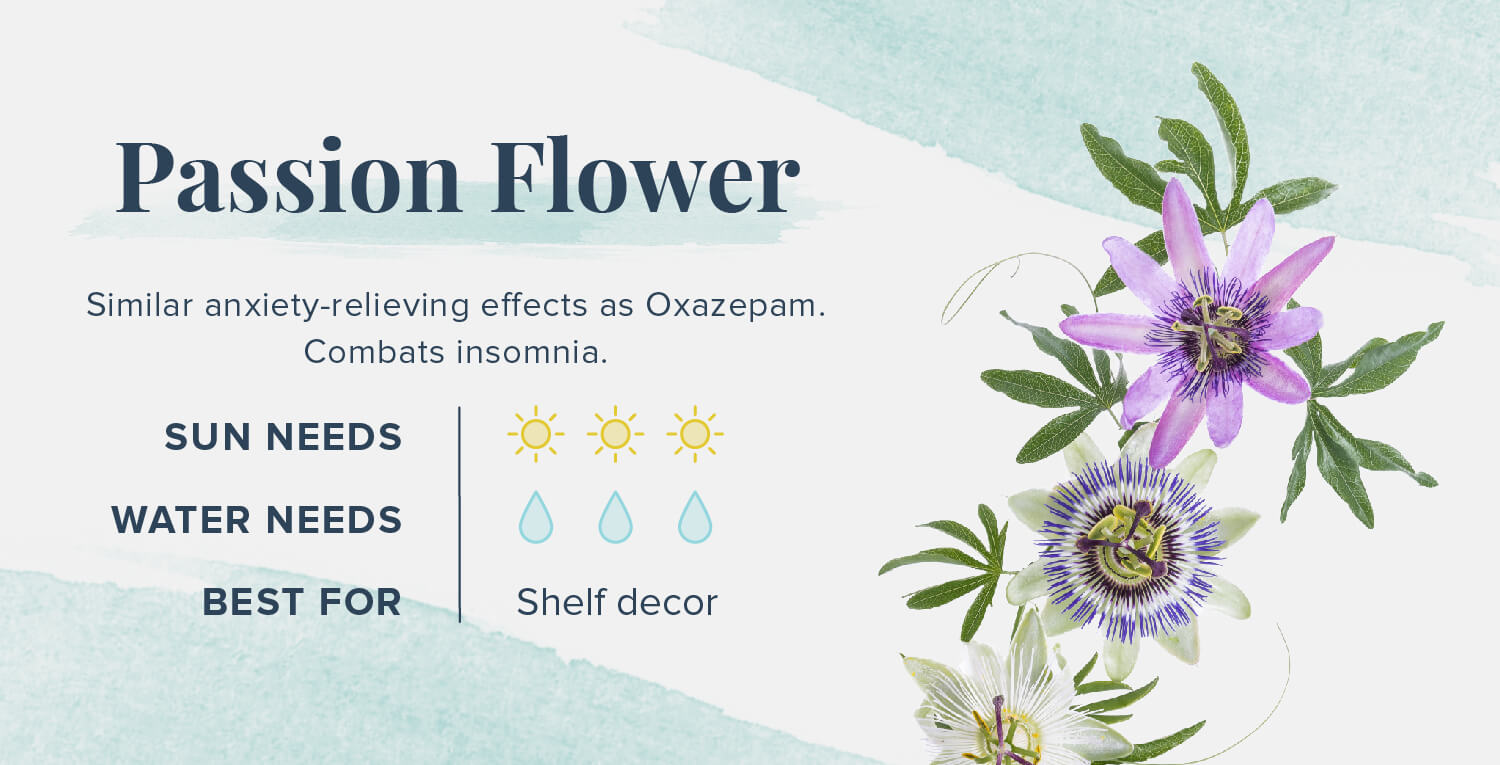 passion flower plants that help you sleep