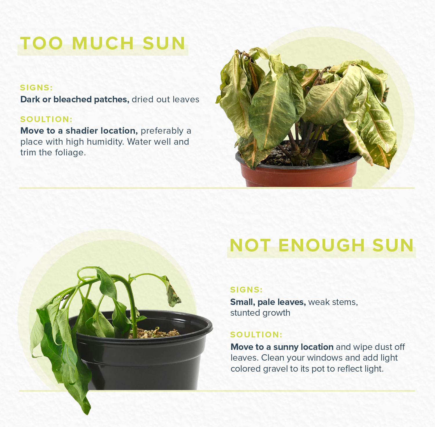 how to revive a plant with sun issues