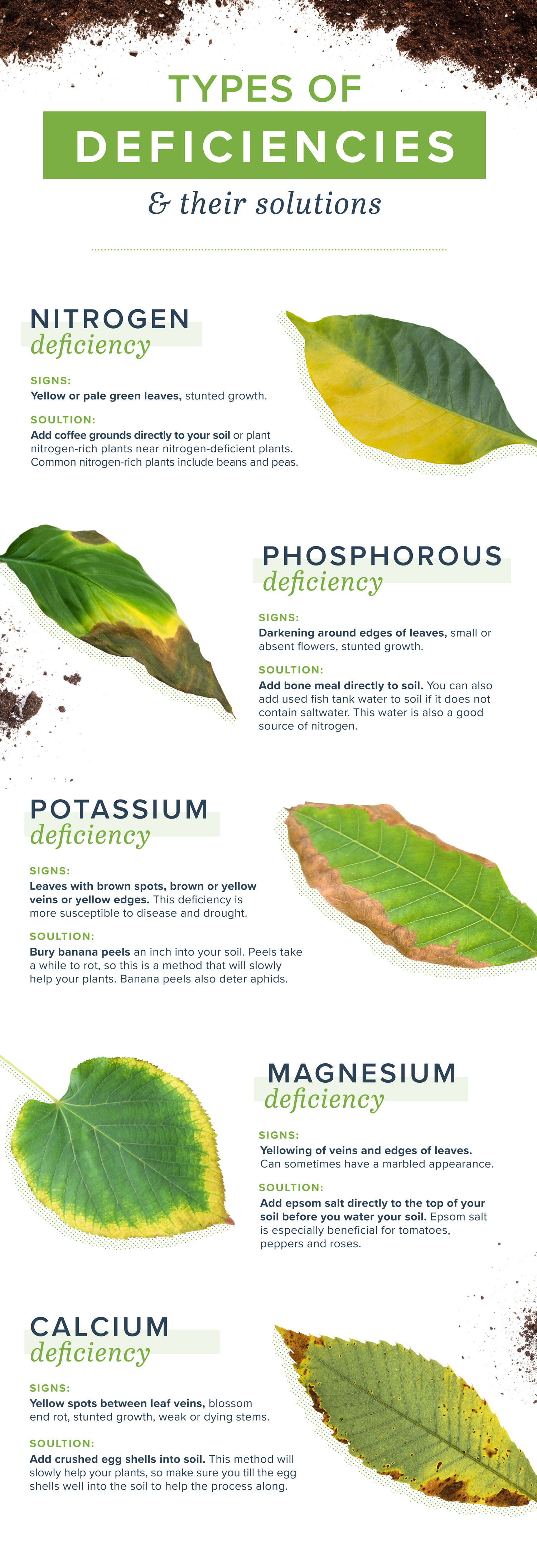 homemade plant food and plant deficiencies