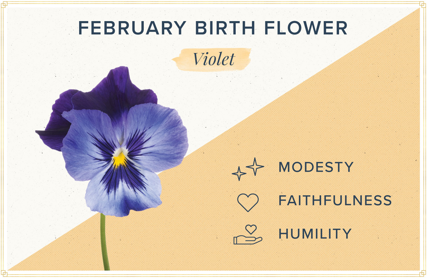 February birth month flower meaning violet