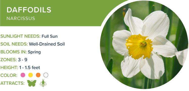 perennials for sun