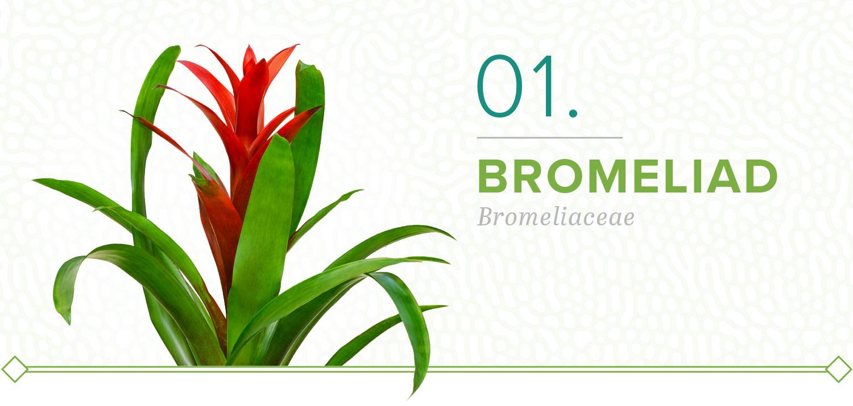 bromeliad plants that don't need sun