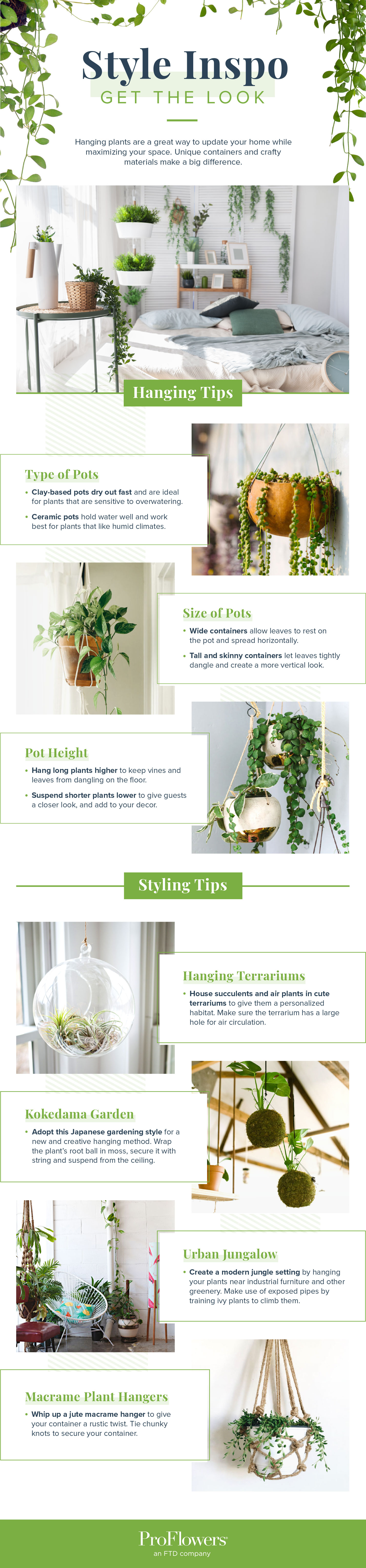 indoor hanging plants styling tips