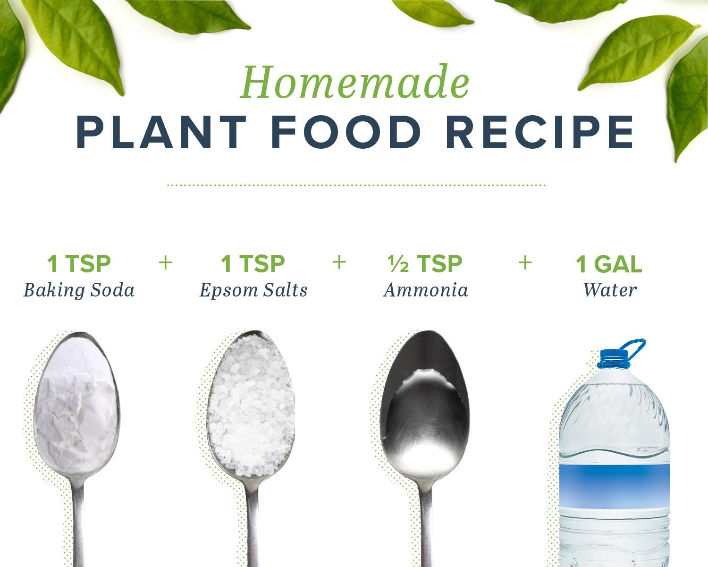 homemade plant food recipe