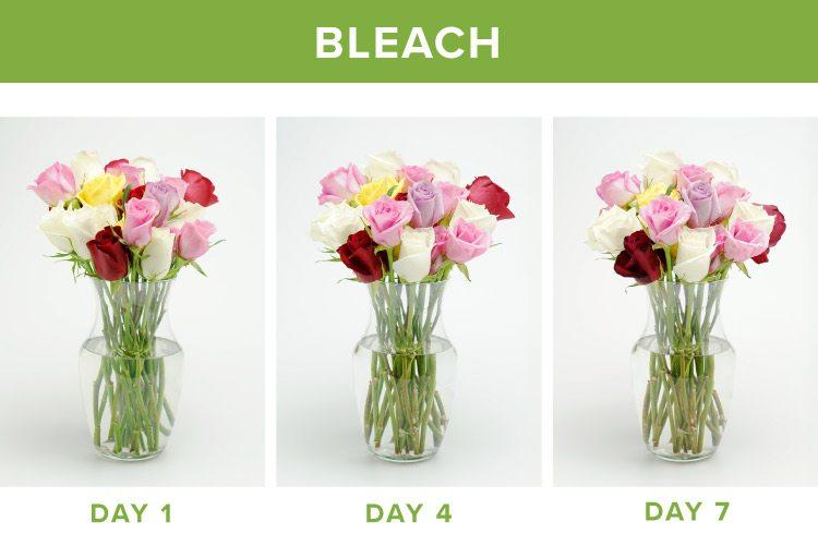 how to make flowers last longer bleach