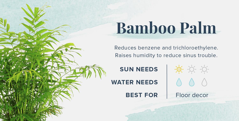 bamboo palm plants that help you sleep