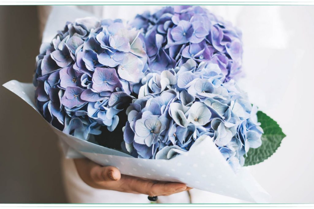 woman holding blue and purple hydrangea