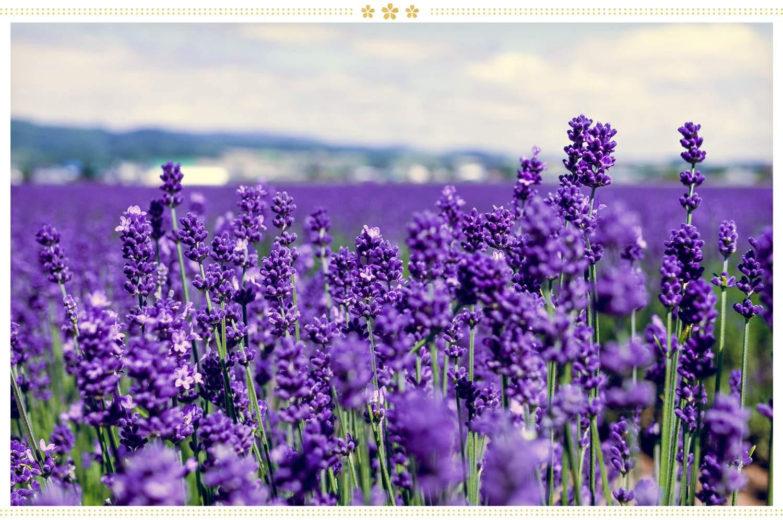 japanese flowers rabenda