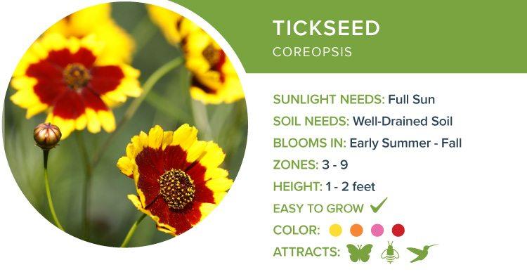best perennial flowers for sun