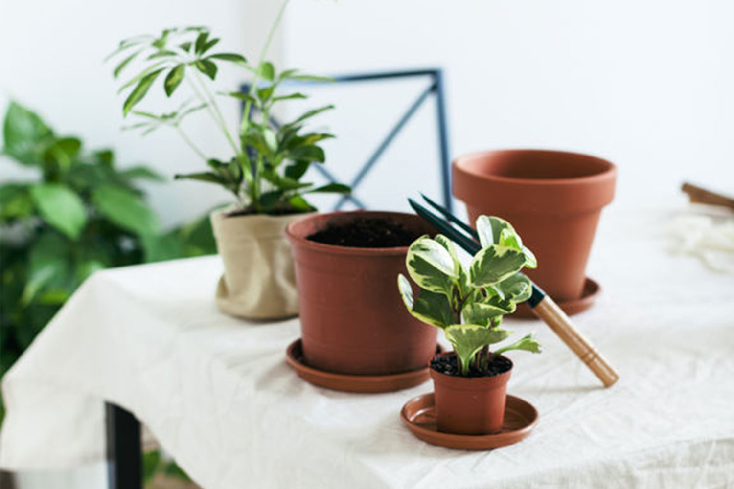 pots and plants on a table with white linen