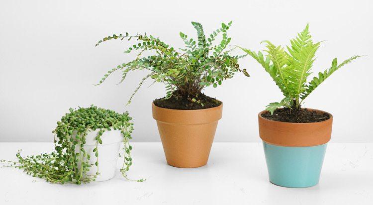 best kokedama plants