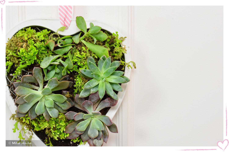 how to surprise your boyfriend diy succulent