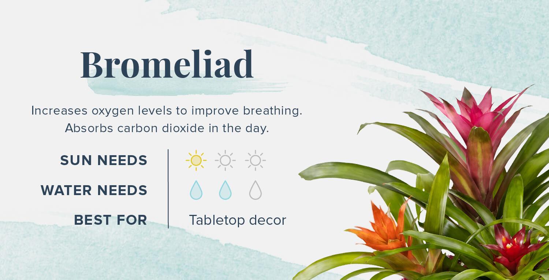 bromeliad plants that help you sleep