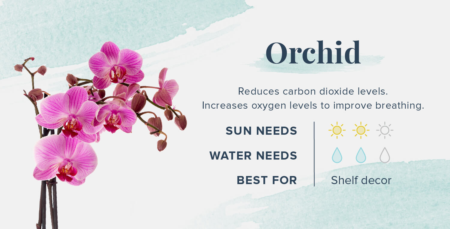 orchid plants that help you sleep