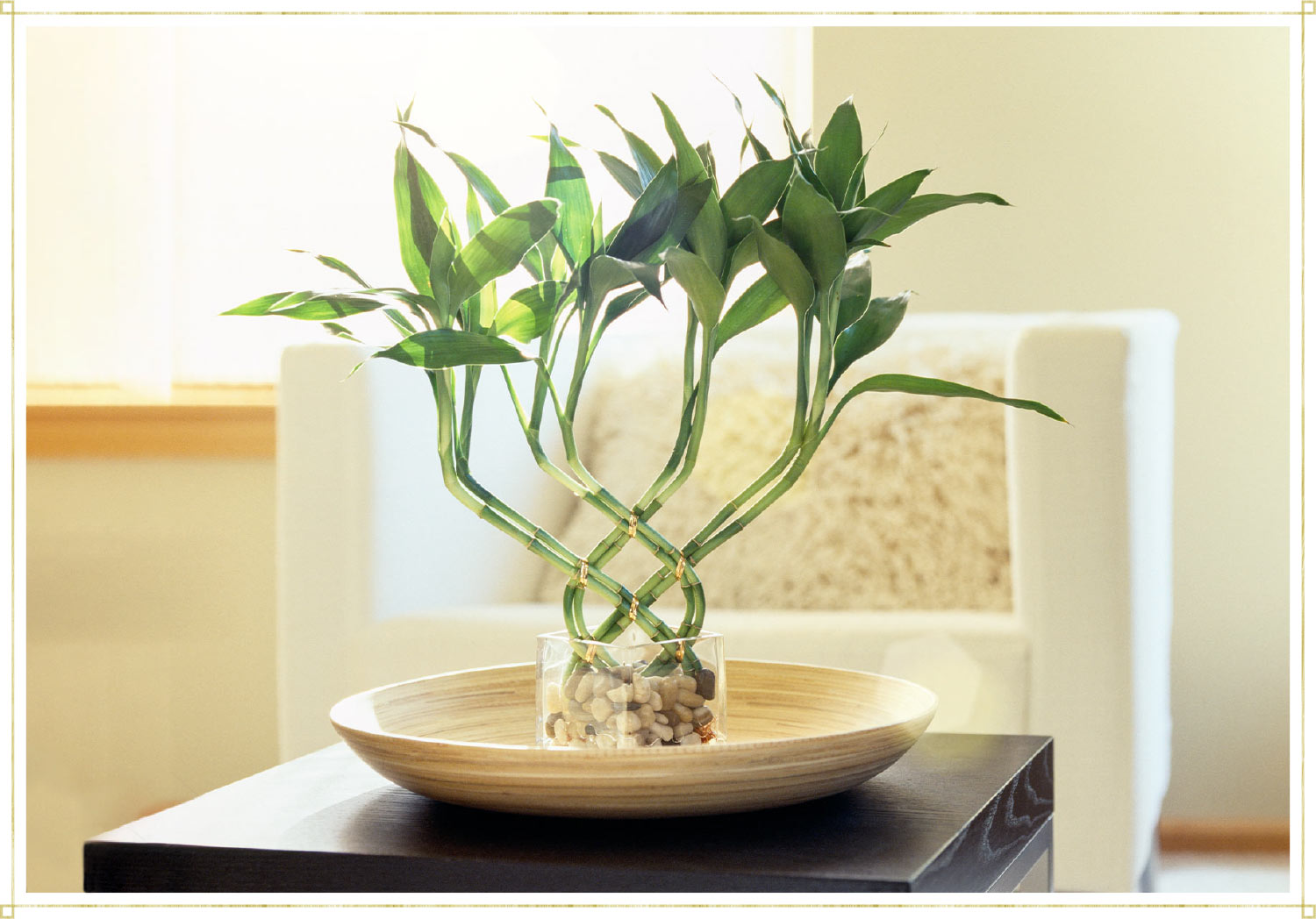 twisted bamboo in a glass jar on a living room coffee table