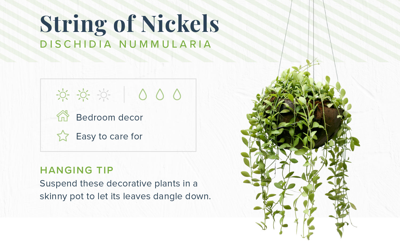 string of nickels indoor hanging plants