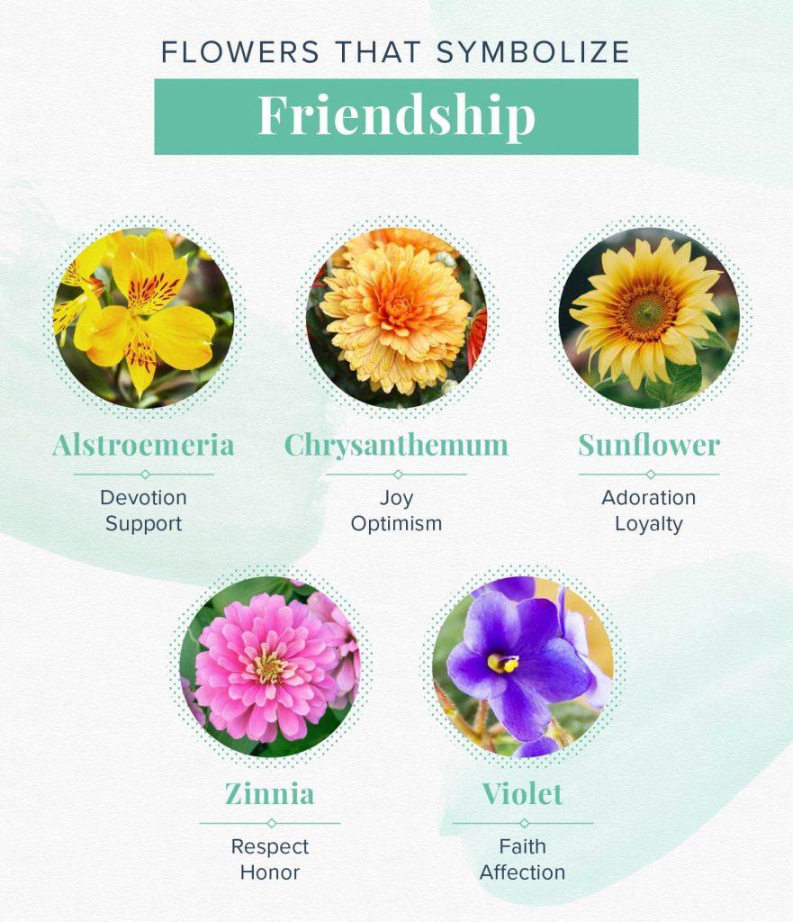 flowers that symbolize friendship