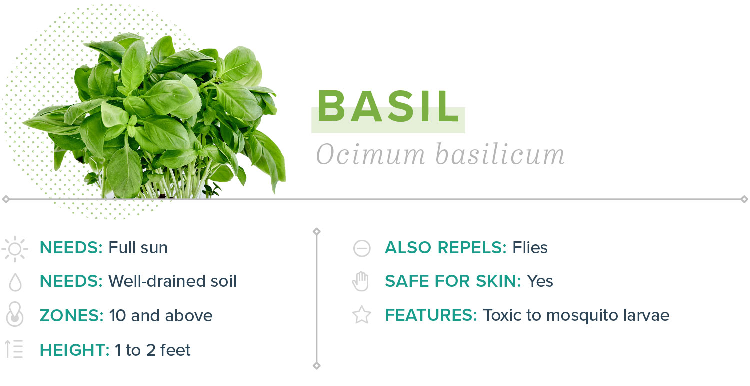 basil plants that repel mosquitoes