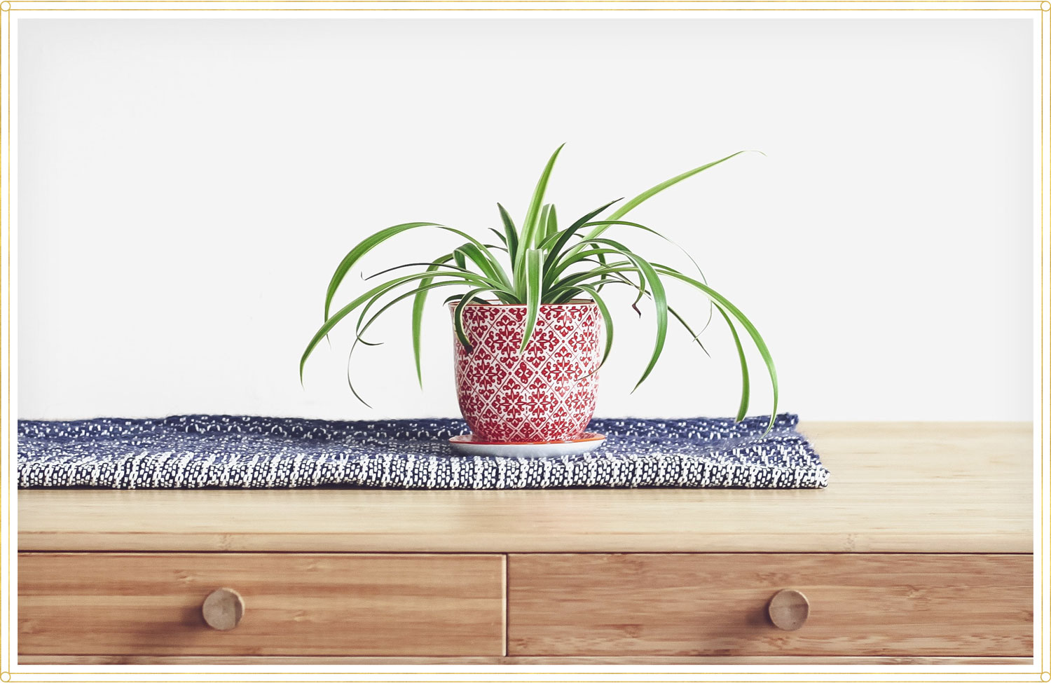 potted spider plant on top of dresser