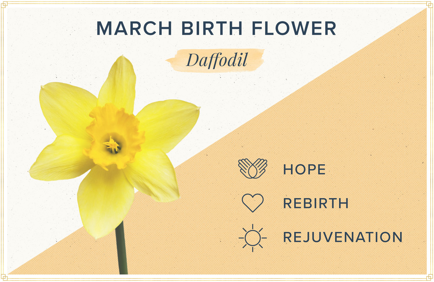 March birth month flower meaning daffodil