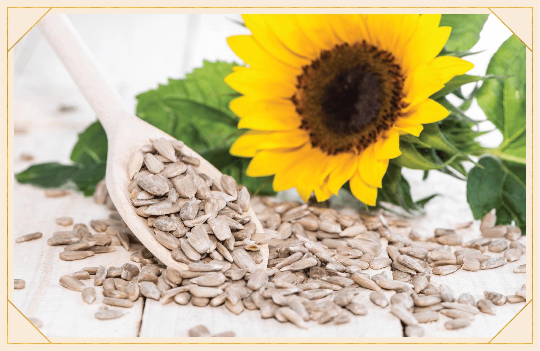sunflower next to sunflower seeds