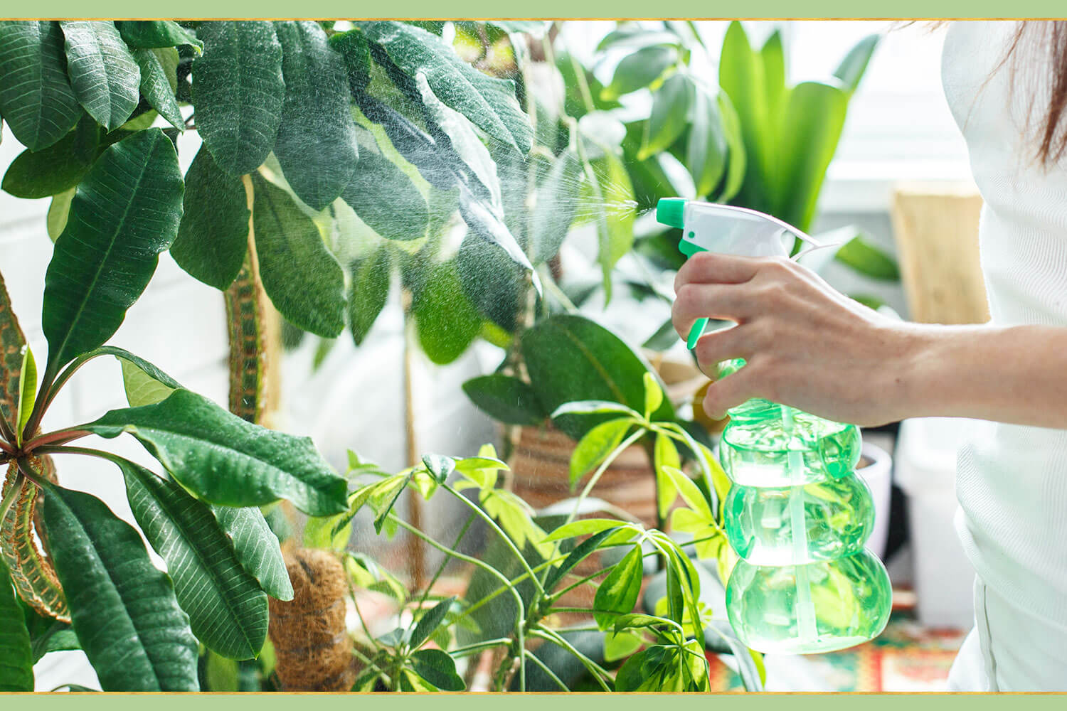 spraying green plants with water
