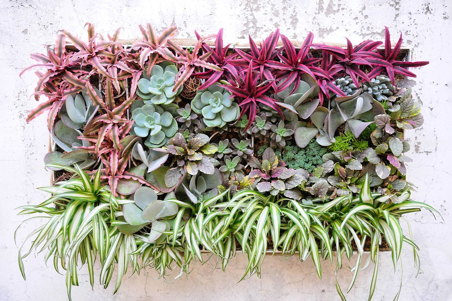 box of succulents hanging on a concrete wall