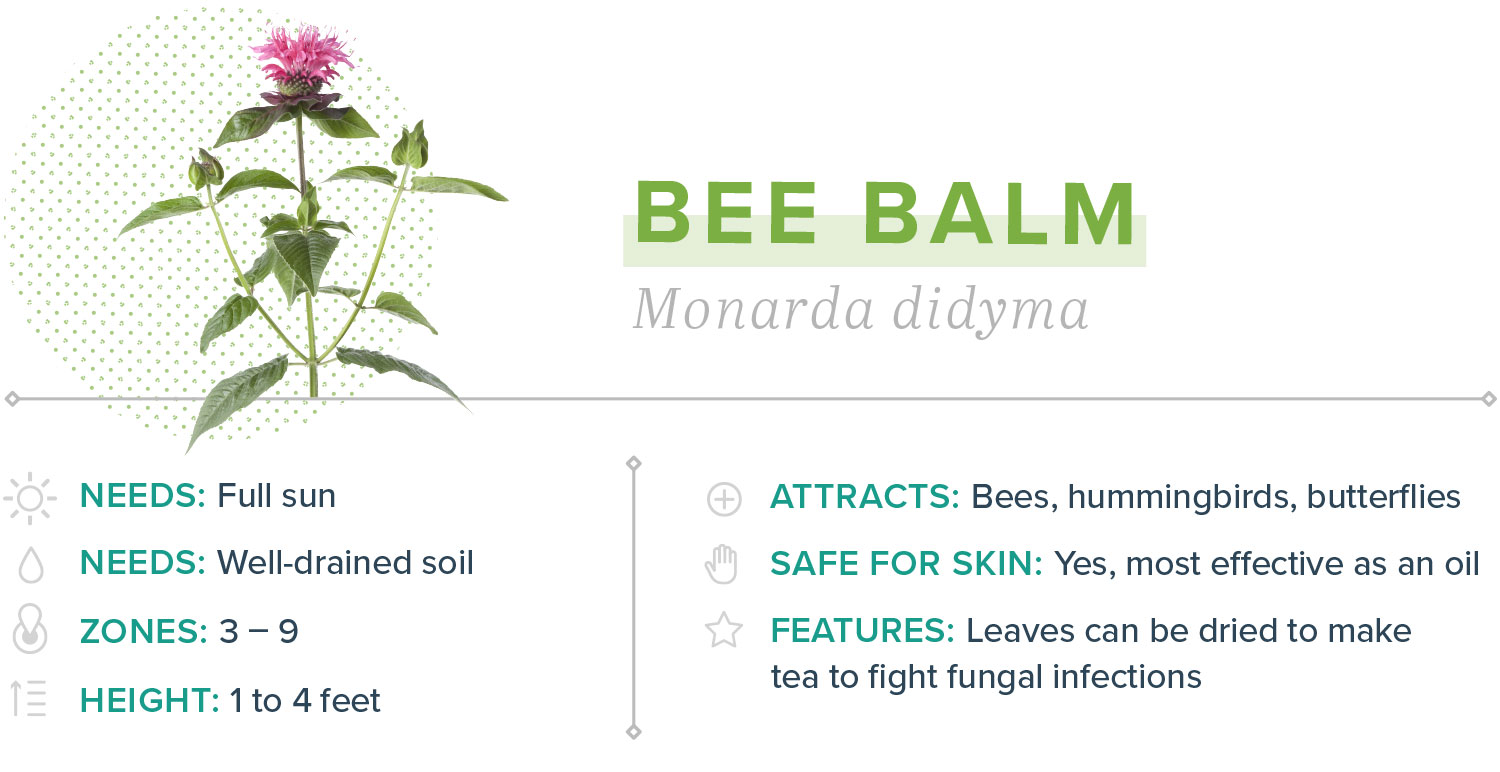 bee balm plants that repel mosquitoes