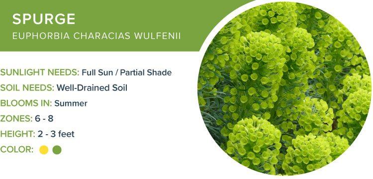 best perennials for shade