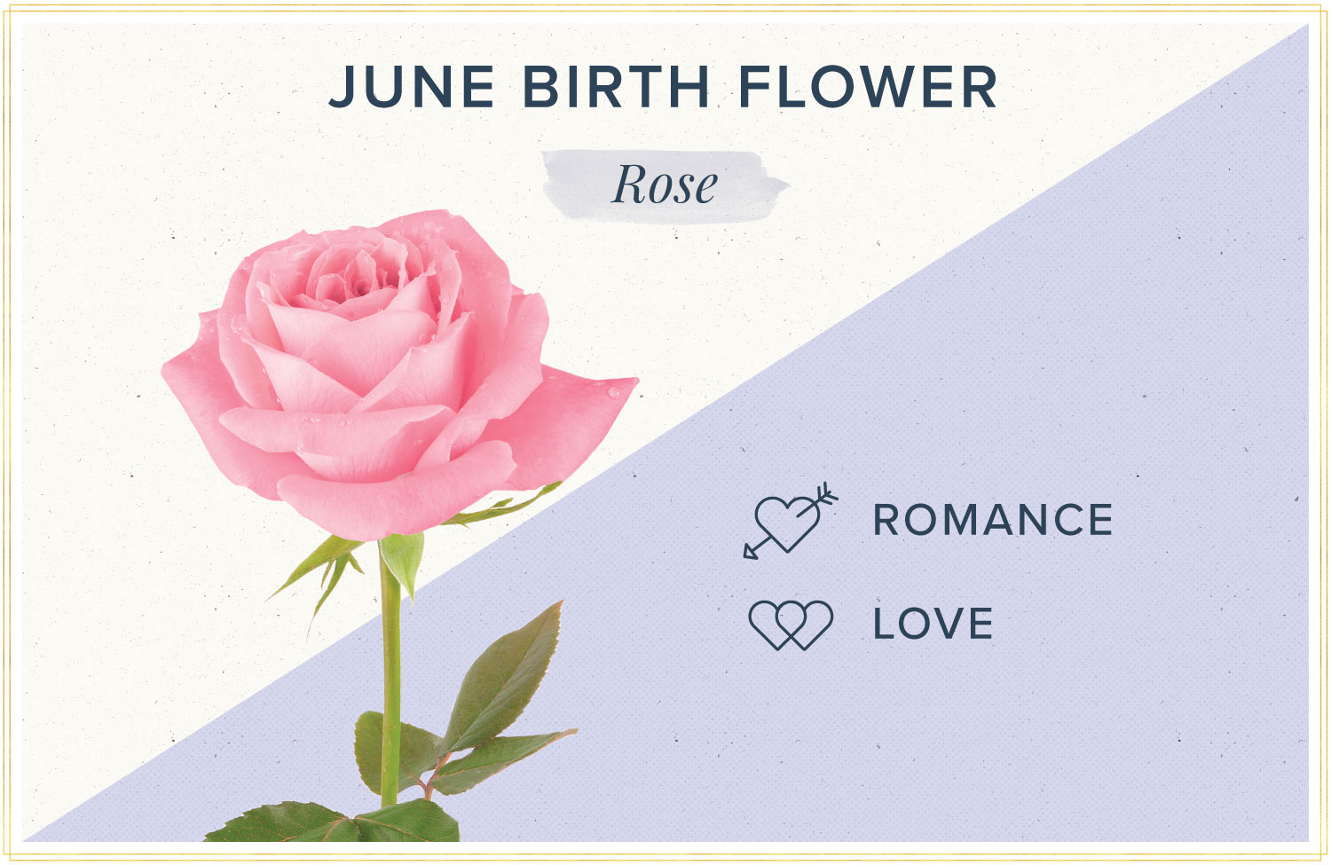 June birth month flower meaning rose