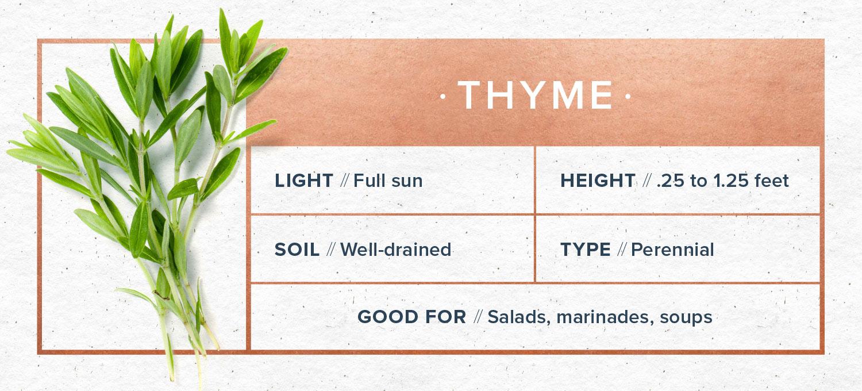 indoor herb garden thyme