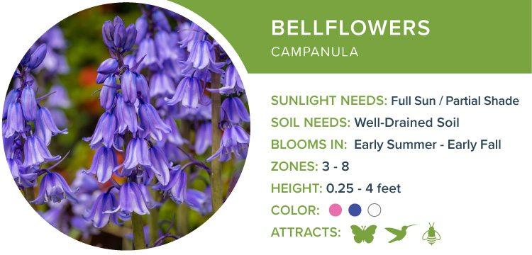 bellflowers best perennial flowers for shade