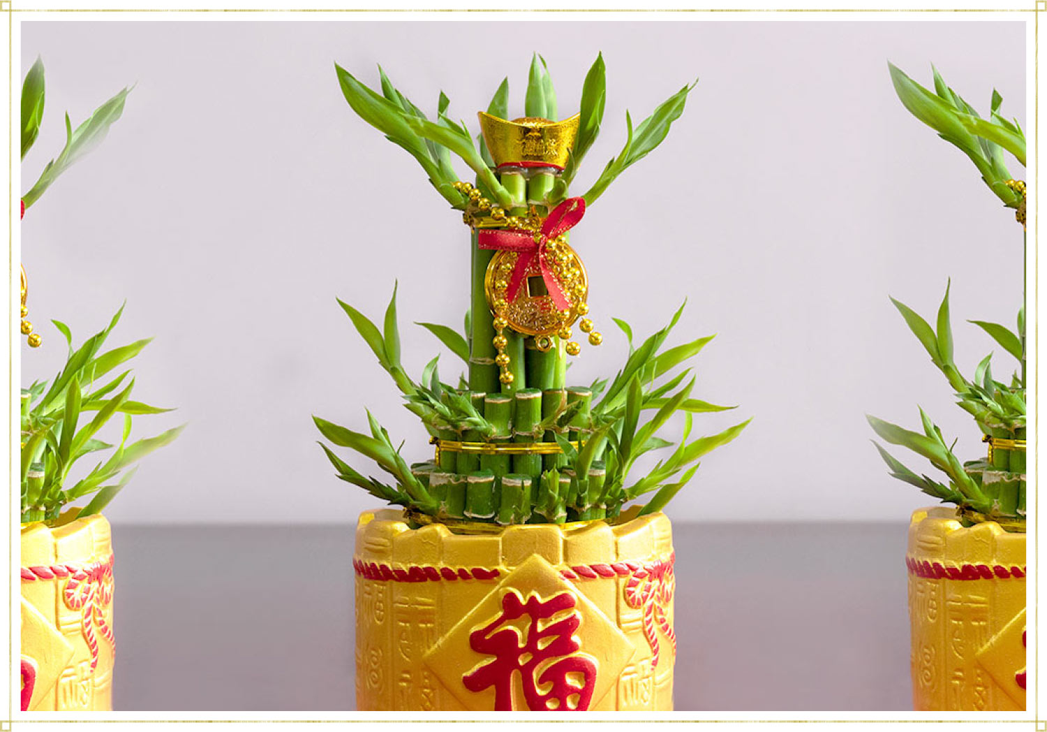 traditional Chinese bamboo in a gold pot with a red ribbon and a metal coin