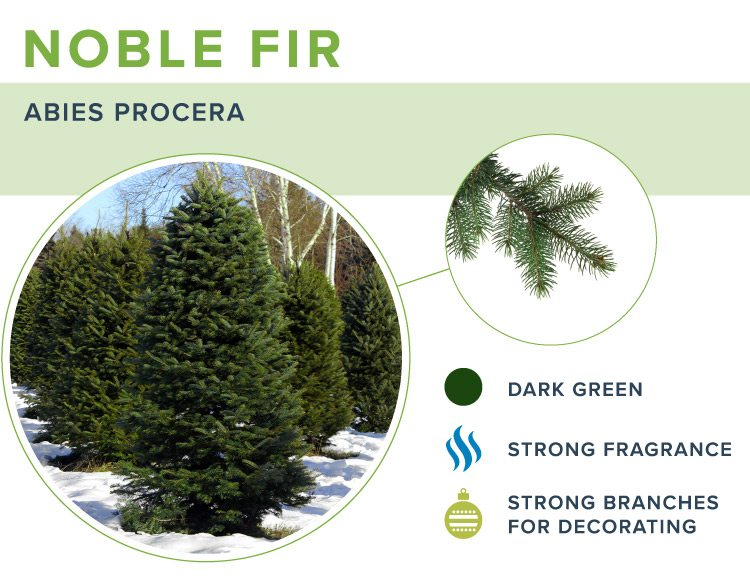 types of christmas trees noble fir