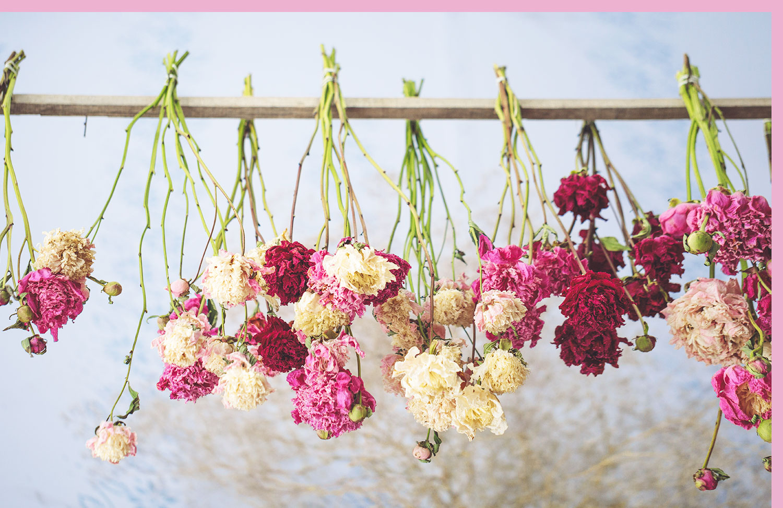 flowers hanging upside down